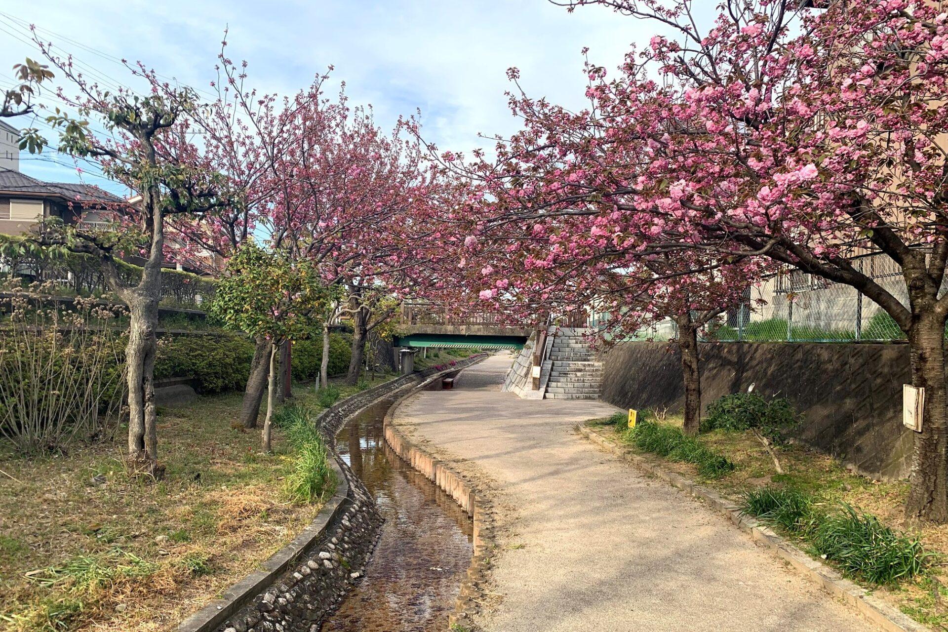 地元四日市富田地区にて疲労抜き+地元の魅力再発見ウォークを実施
