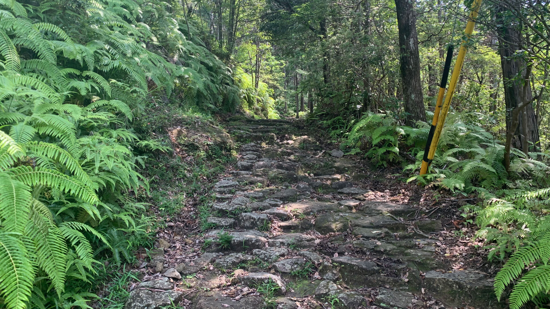 伊勢路一番人気の「馬越峠コース」にて熊野古道ウォークに初挑戦