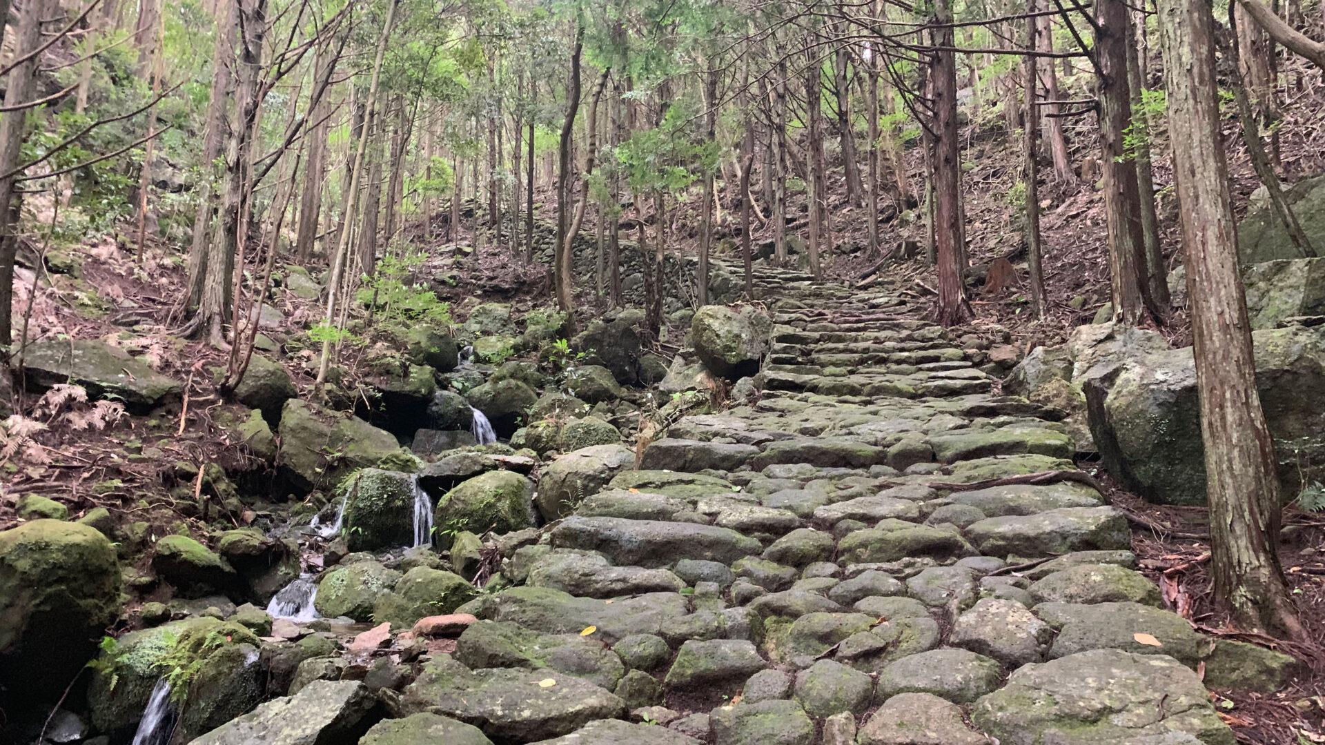 熊野古道・伊勢路の人気コース「松本峠」ウォークで熊野市の魅力を再発見