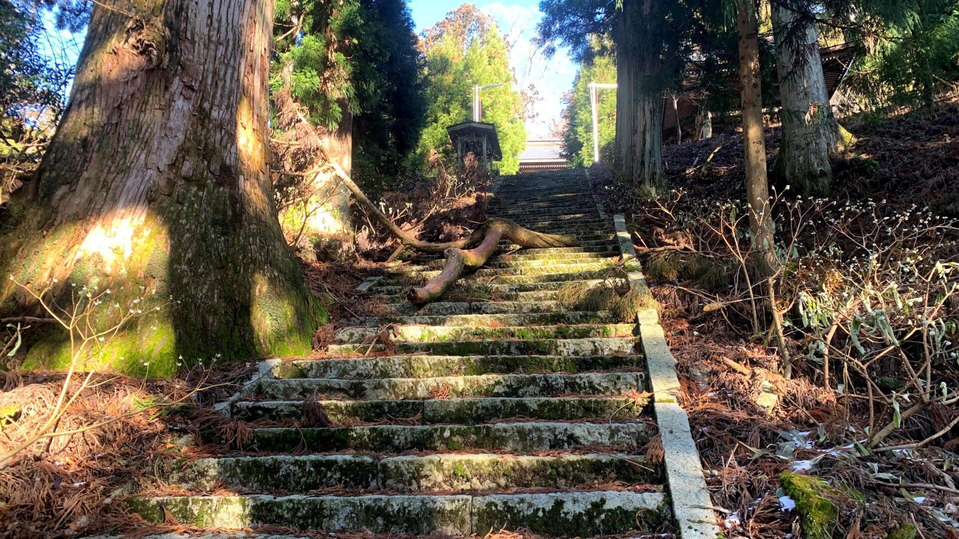 年末恒例の椿大神社⇔野登寺峠走で脚筋をいじめぬいてきました